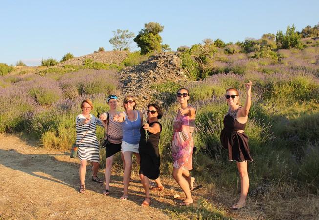 Kroatien: Lavendel Ernte
